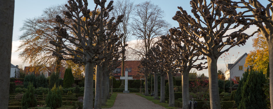 Træallé på kirkegård